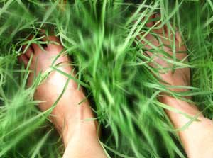 Feet in grass. Photo by AussieGal